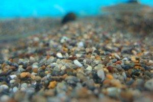 画像3: 底モノ魚に最適!床砂利 「津軽」 5kg